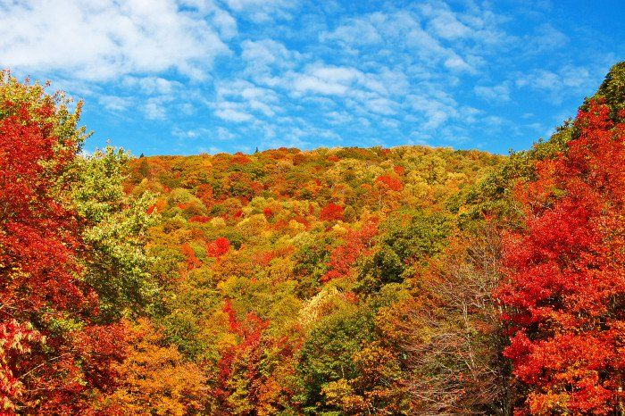 5) Fall Foliage Tour