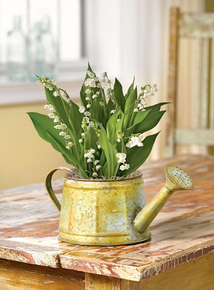 Lily of the Valley Bulb Basket - Convallaria Bulbs   Gardeners.com