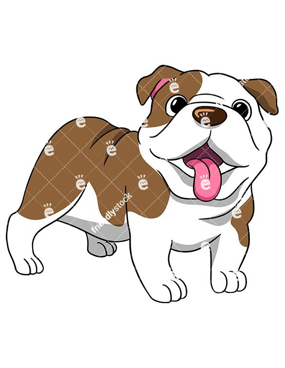 Wrinkly English Bulldog Standing With Its Tongue Hanging Out