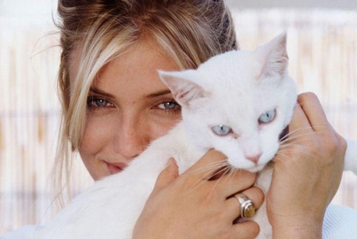 #Cameron #Diaz and a gorgeous all-white #kitty. http://kittyflix.com/                                                                                                                                                      Más