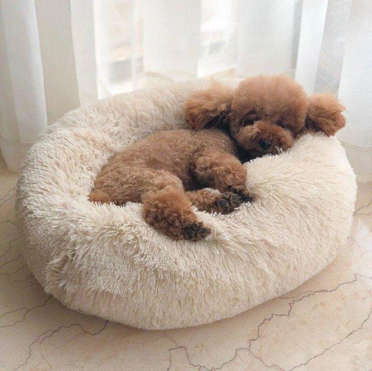 Super Soft Calming Bed For Dog & Cat Dog pet beds, Soft