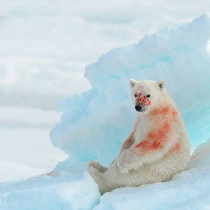3100fc97042eaa44bcda96916251b892--vans-polar-bears.jpg
