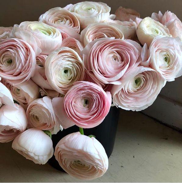 Wonderful No Cost Ranunculus Bouquet Concepts Ranunculus Bouquet Ranunculus Bouquet Pink Ranunculus Wedding