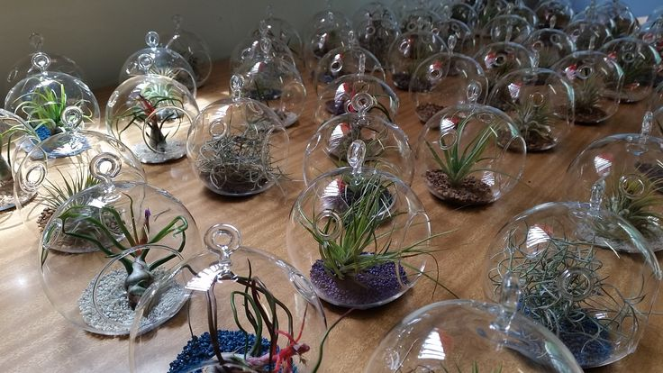 152 Small hanging terrariums orbs made up for a wedding.