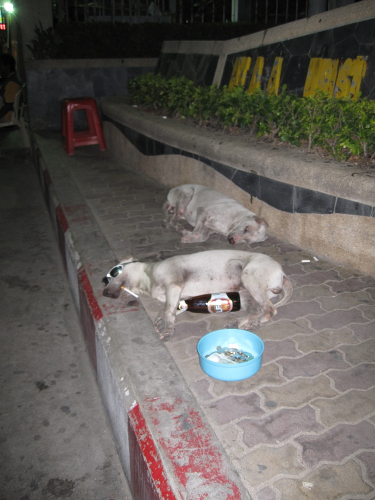Drunk dog at Pattaya, Thailand.