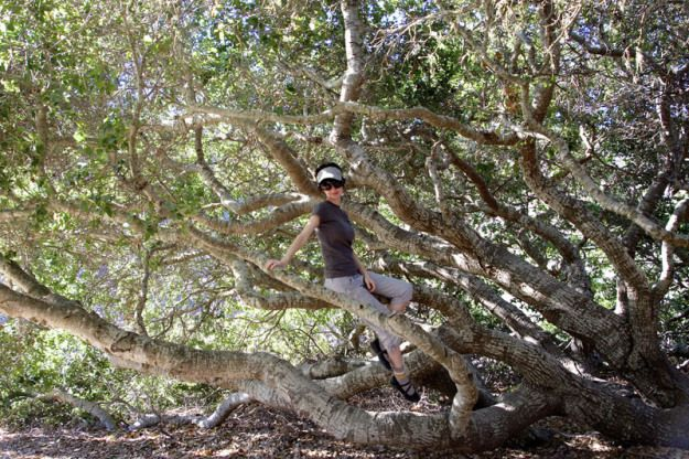 Jess in a tree at Montaña de Oro State Park - Outdoor Adventures in Scenic Los Osos California #LosOsos #Baywood Park @losososbaywood