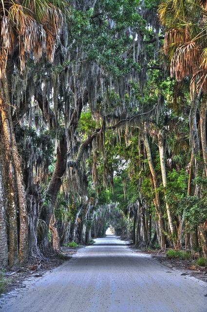 dirt road in Ellenton, Florida