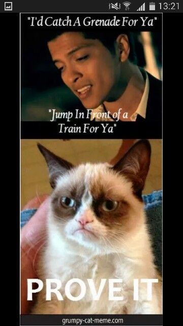 the grumpy cat is my idol.