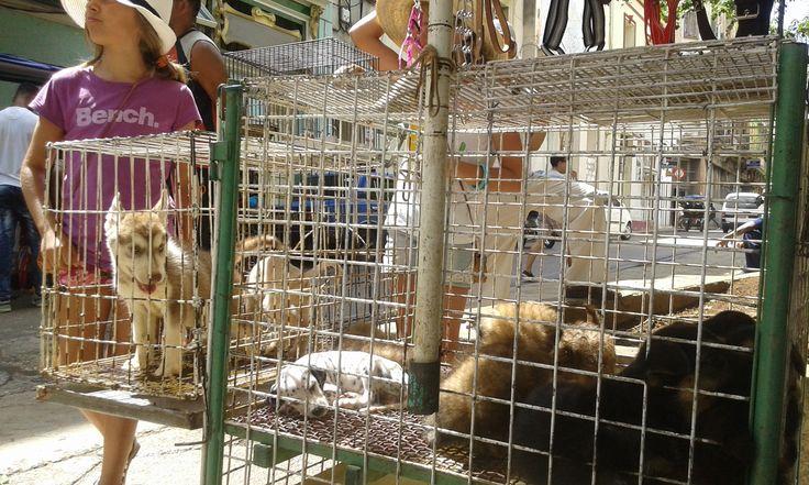 #Sociedad: ¿Cómo mantener a una #mascota en #Cuba?  Un collar #antipulgas cuesta 10 CUC...