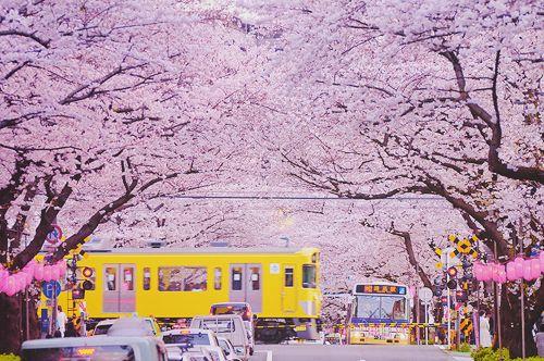 日本~♪(^_^)☆