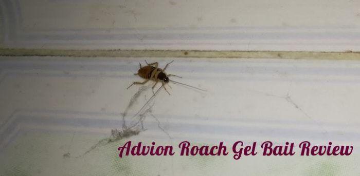 Pin on Best Roach kILLER
