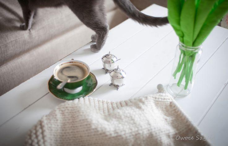 #owoceszycia Living room  Cat, coffee & knitting