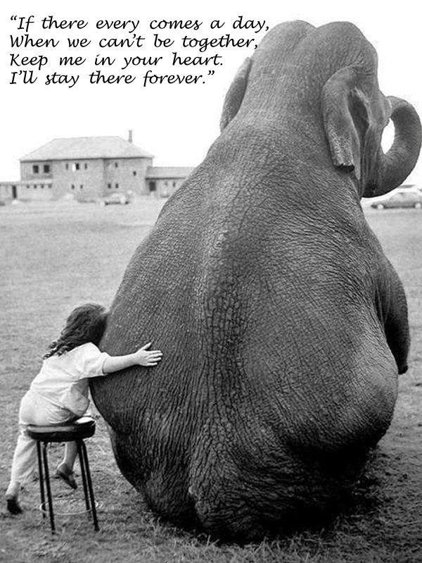 We are like elephants you and I, even parted we are as one. #togethertime #invitesfortwo