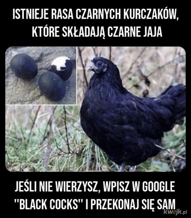 Memy I Smieszne Obrazki Z Glownej Strona 40843 Kwejk Pl Memes Funny Humor Od rana kilka dużych polskich serwisów internetowych miało lub ma nadal problem z dostępnością. memy i smieszne obrazki z glownej