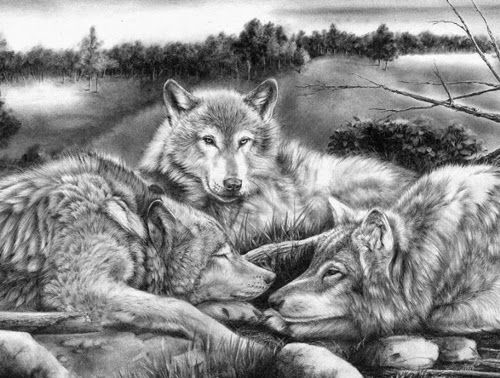 Coloring Pages Wolf : 156 best wilde dieren images on pinterest coloring books coloring