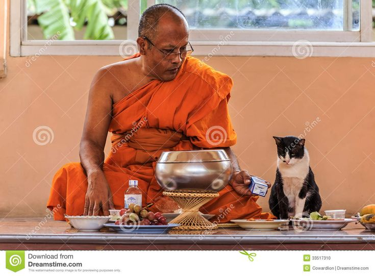 cats in buddhist temples - Google Search