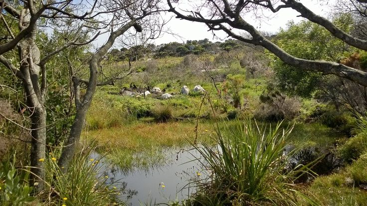 Nellie's Pool in Silvermine East, Cape Town