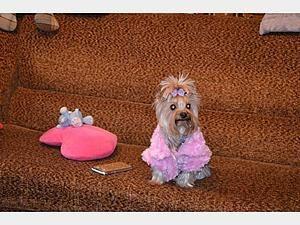 10 лет назад собачья одежда не была популярна. Аргументом в пользу одежды для собак сегодня является тот факт, что она защищает шерсть животного от чрезмерного загрязнения. Теперь собака член семьи, и требует внимания, заботы, как и маленький ребенок. Лучшим примером заботы о младшем четвероногом друге может быть вязаная своими руками одежда. Что бы вы не выбрали - ваш домочадец будет искренне…