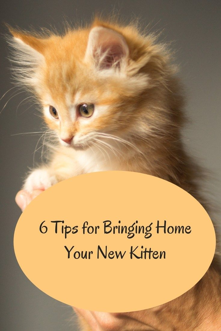 6 Tips For Preparing To Bring Home Your New Kitten Life Cats Kitten Care Cat Training Cat Care