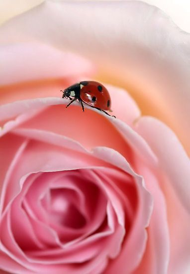Ladybug                                                       …                                                                                                                                                                                 More