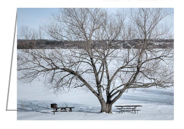 """Winter Tree - Pinhey's Point, Ontario - Greeting Card. That is the Ottawa River in the background. 5"""" x 7"""". Blank inside. Includes envelope. Buy online at Rob's Cards and Prints."""