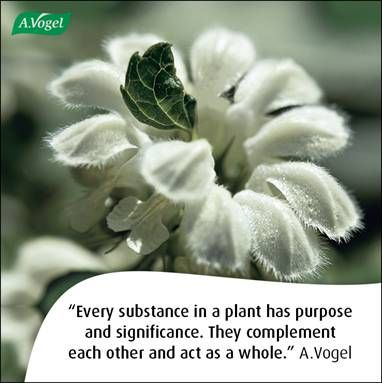 Every substance contained in a plant has purpose and significance. They complement each other and act as a whole. A.Vogel