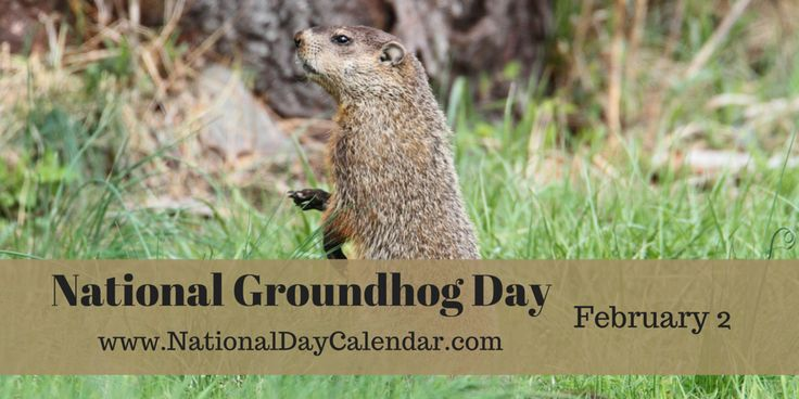 GROUNDHOG DAY Will he see his shadow or will he not? That is the question! Groundhog Day is celebrated on February 2nd, each year in the United States and Canada. For a nice welcomed break during...