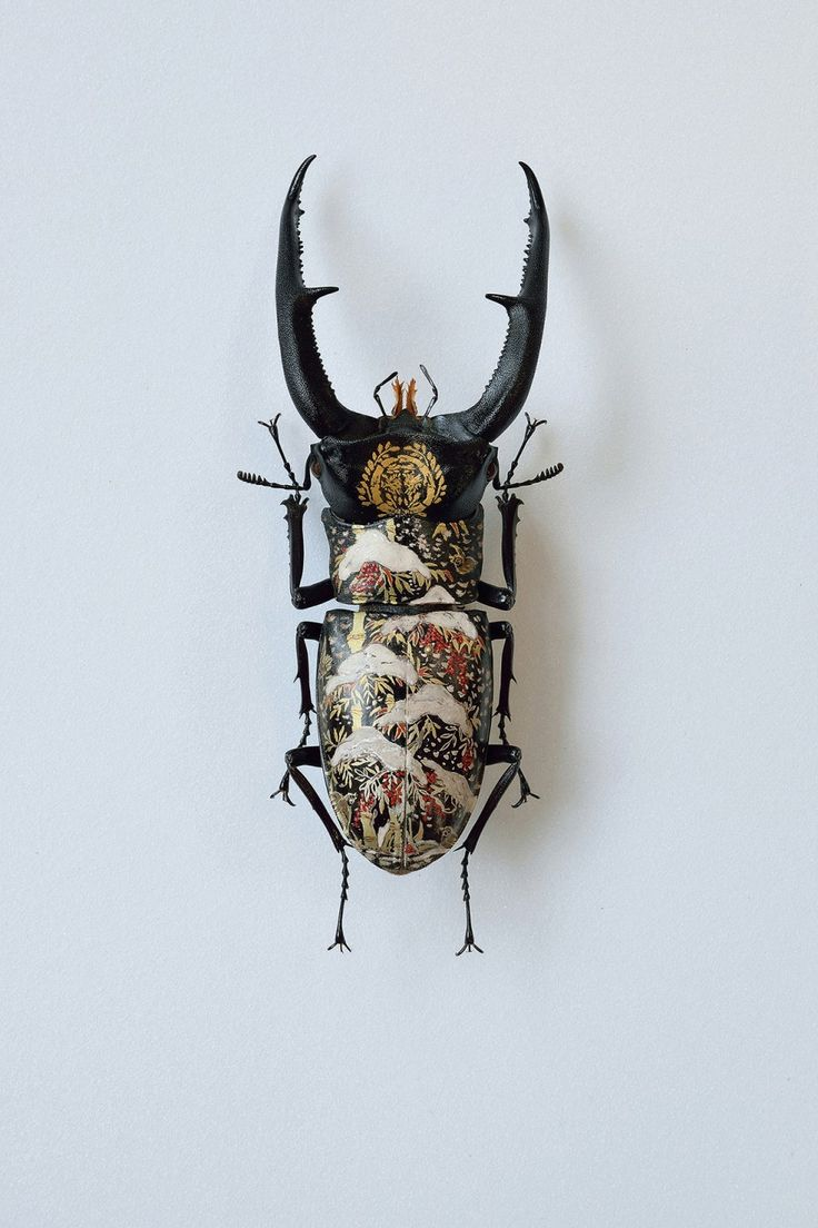 "archiemcphee: "" The Department of Teeny-Weeny Wonders loves the work of Japanese artist Akihiro Higuchi, who uses beetle and moth specimens as miniature canvases for exquisite oil paintings. ""..."