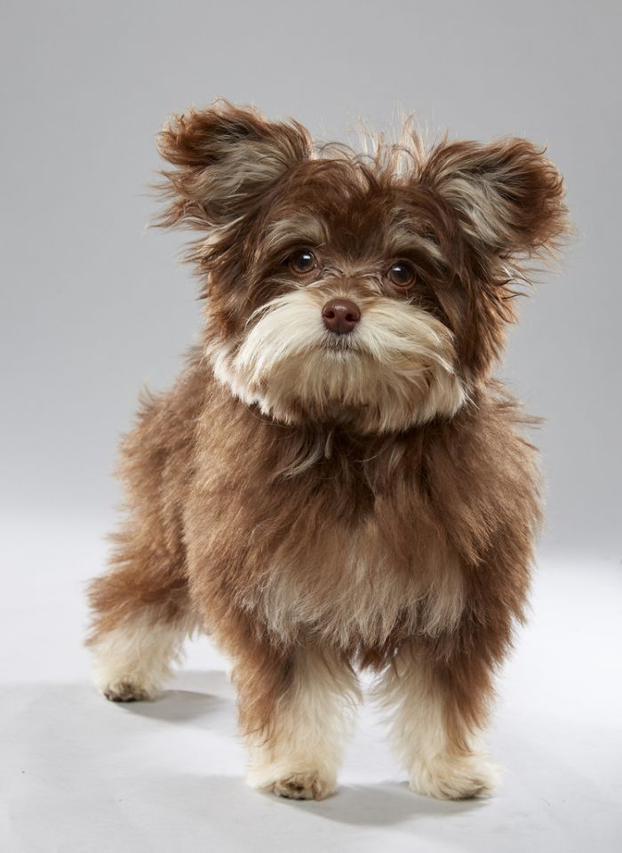 Sable (Credit: Animal Planet) Animal Planet Puppy Bowl XIII Lineup
