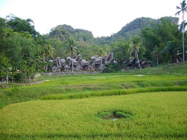 Tanah Toraja #Sulawesi #Indonesia