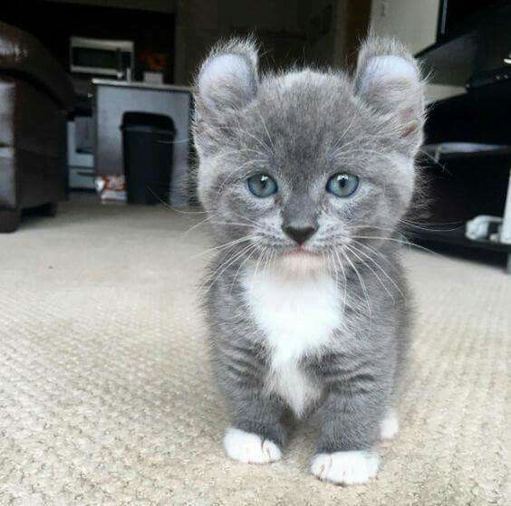 Is this an adorable kitten or what! #kitten