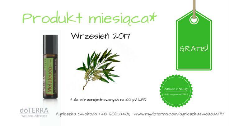 Produkt miesiąca - wrzesień 2017; olejki eteryczne, doterra, melaleuca, drzewko herbaciane