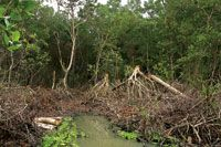 Tala de bosques inundables para obtención de leña.
