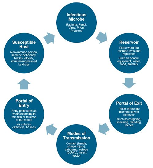 The Chain of Infection | Isopharm