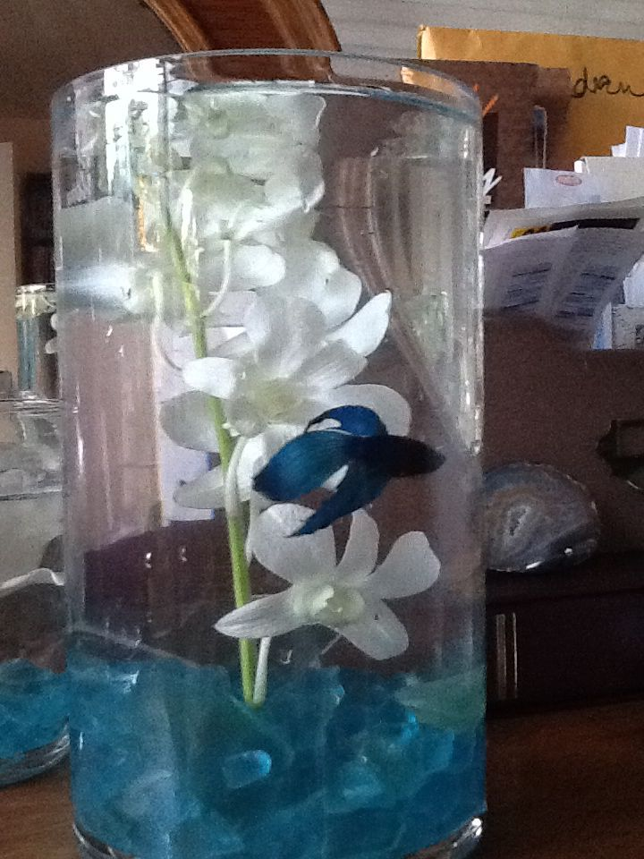 Mock up of the beta fish centerpieces with orchid stem and sea glass
