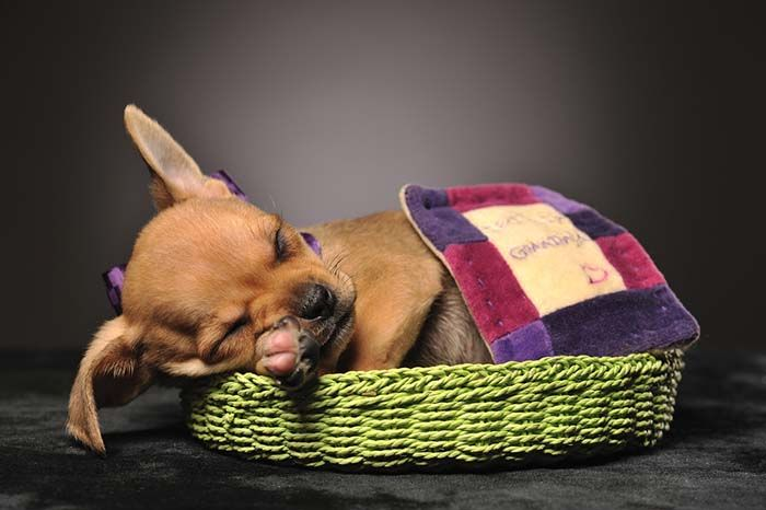 310785d4bbb6bfeebd8f0220422fc621 - How Do I Get My Puppy To Sleep In His Bed