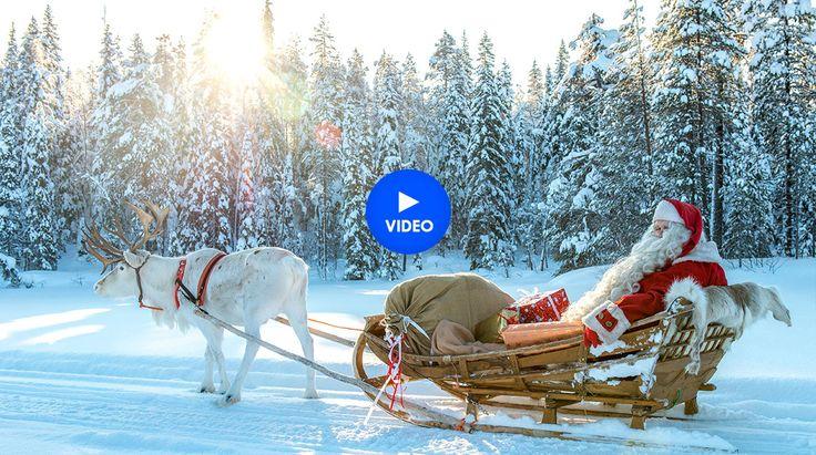 Travelpello.fi: Pello - Pays des rennes du Père Noël en Laponie en Finlande. Découvrez le renne du Papa Noël en Laponie finlandaise. Cercle Polaire Arctique