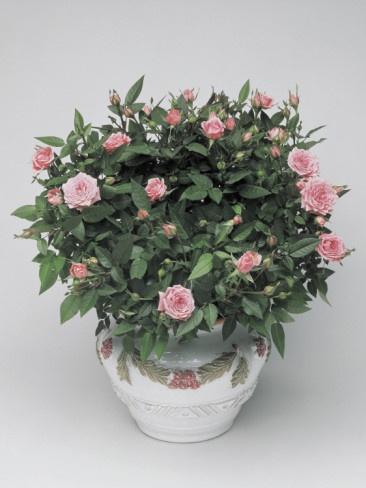 Miniature flowers in a pot!