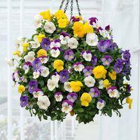 Conocer las mejores plantas para cestas colgantes nos permitirá poder crear verdaderas maravillas. Las cestas colgantes con plantas de flor es un magnífico recurso decorativo para el porche, la ter…