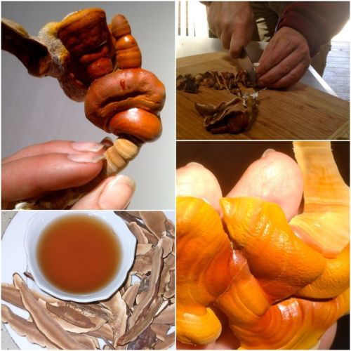 Making fresh Reishi mushroom tea.  The lingzhi mushroom or reishi mushroom 靈芝. Highly prized in Chinese medicine, this mushroom is now the subject of many medical research studies for its powerful healing properties.