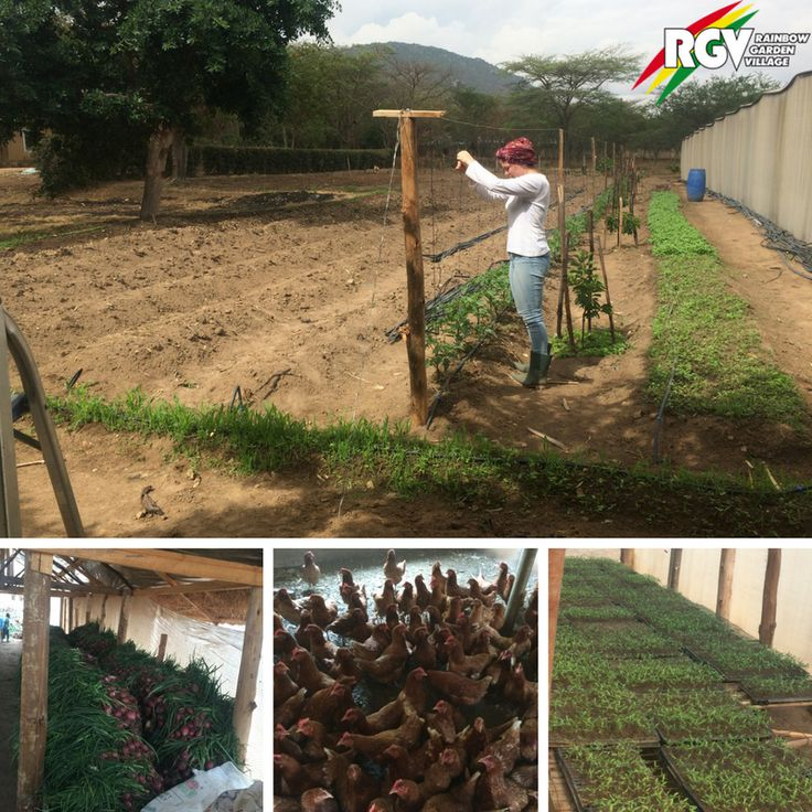Nachhaltigkeit ist das A und O! In unserem Farming Projekt in Iringa, Tansania, kannst du dich genau dafür einsetzen. Bringe dich ein!