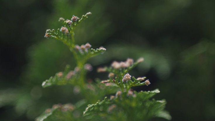 Evergreen. #Olympus #pen #olympuspen #camera #digital #photography #epl #mft #light #shadow Rob King