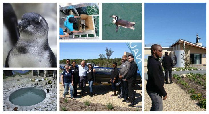 APSS - African Penguin and Seabird Sanctuary Address: Geelbek Street, Van Dyks Bay, Gansbaai Tel: 072 598 7117 Email: info@africanpenguin.org