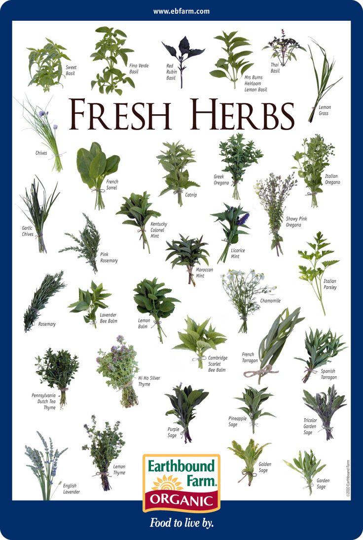 Food & Herbs Chart Benefits | ByzantineFlowers |Herbs Chart