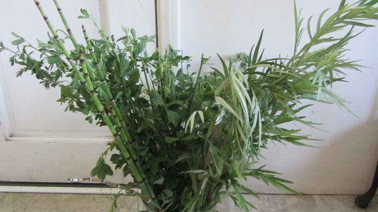 Horse tail, alfafa, estafiate and more. Green shrubs arrangement
