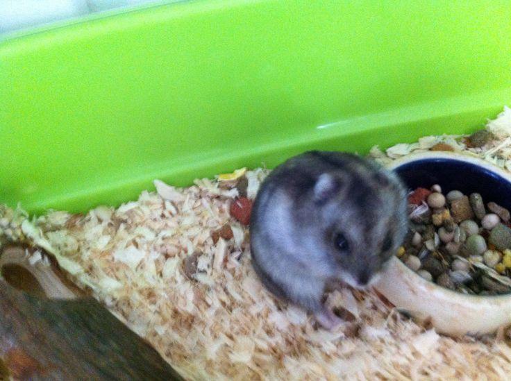 Min søde hamster alvin