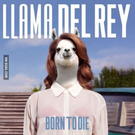I accidentally googled Lama Del Rey, I wasn't disappointed