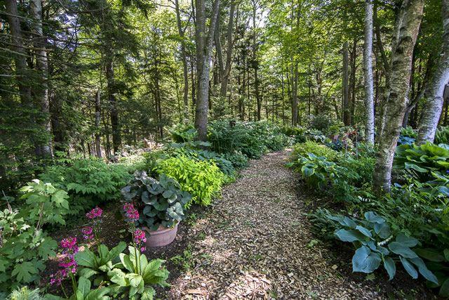 Woodland Garden Woodland Garden Garden Landscape Design