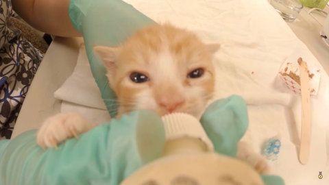 Jak wygląda praca w żłobku dla kotów? Ta pielęgniarka przez dzień nagrywała wszystko kamerką GoPro - Noizz