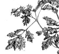 a detail of my pointilliste artwork